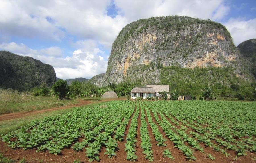 Agriculture à cuba
