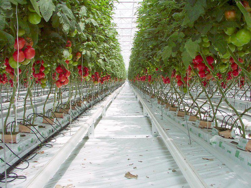 LA ZAD EN L'ÉTROIT TERRITOIRE - L'OUTRE-RÉEL IV.2 Culture-hors-sol-tomates