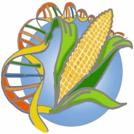1684142423a OGM   Organismes Génétiquement Modifiés - notre-planete.info