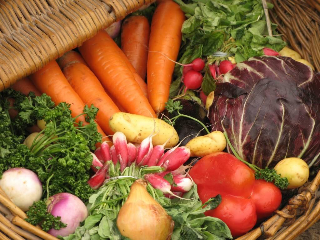 e58bf4d093 Les végétariens manquent de protéines ? Les incroyables révélations ...
