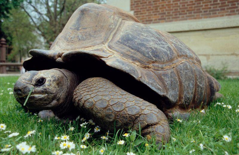 Décès de la plus vieille tortue géante française à 146 ans !