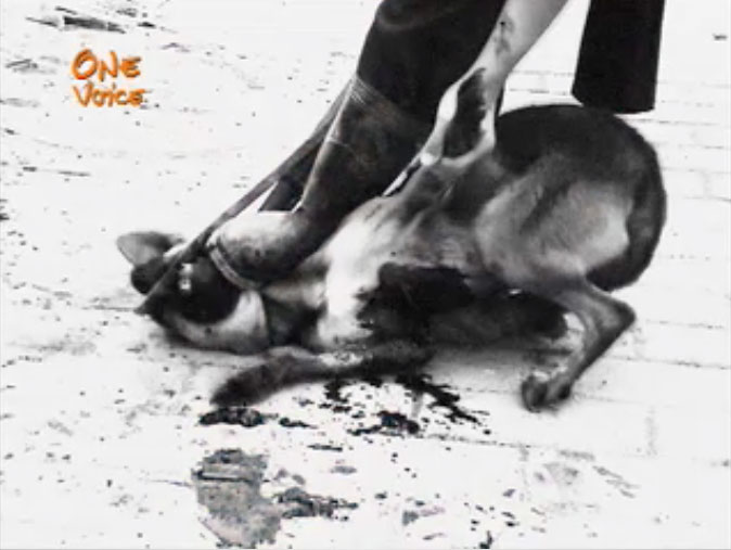 Enquête sur le commerce de la viande de chien en Chine