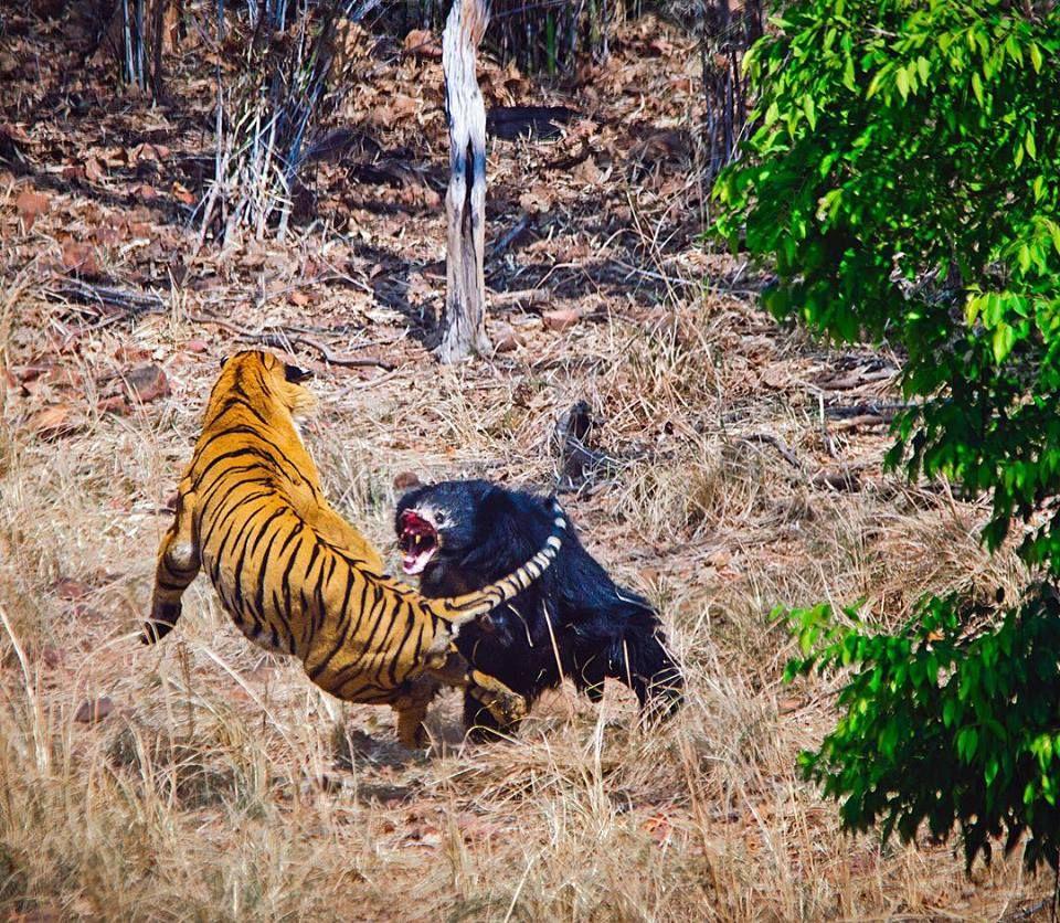 sites de rencontres de tigres datant d'un homme 22 ans plus jeune