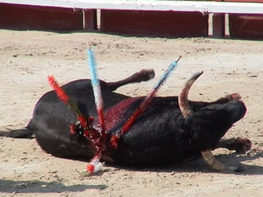 http://www.notre-planete.info/actualites/images/animaux/corrida_crac.jpg