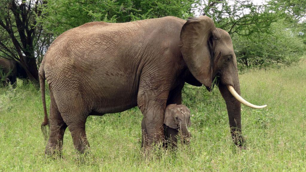 La Chine met fin au commerce légal de l'ivoire sur son territoire ...