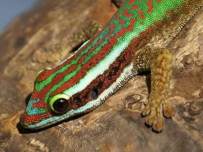 Fabuleux Liste rouge des espèces menacées en outre-mer : la faune de La  FB92
