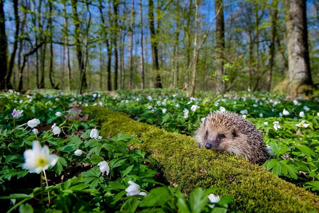 """Résultat de recherche d'images pour """"Notre mode de vie actuel est un danger pour la biodiversité"""""""