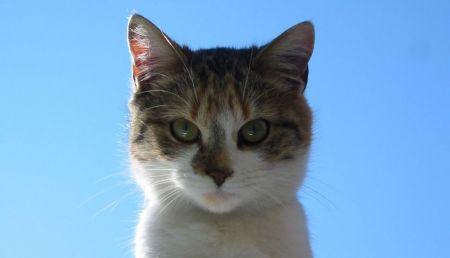 Le chat domestique, un fléau envahissant pour la biodiversité