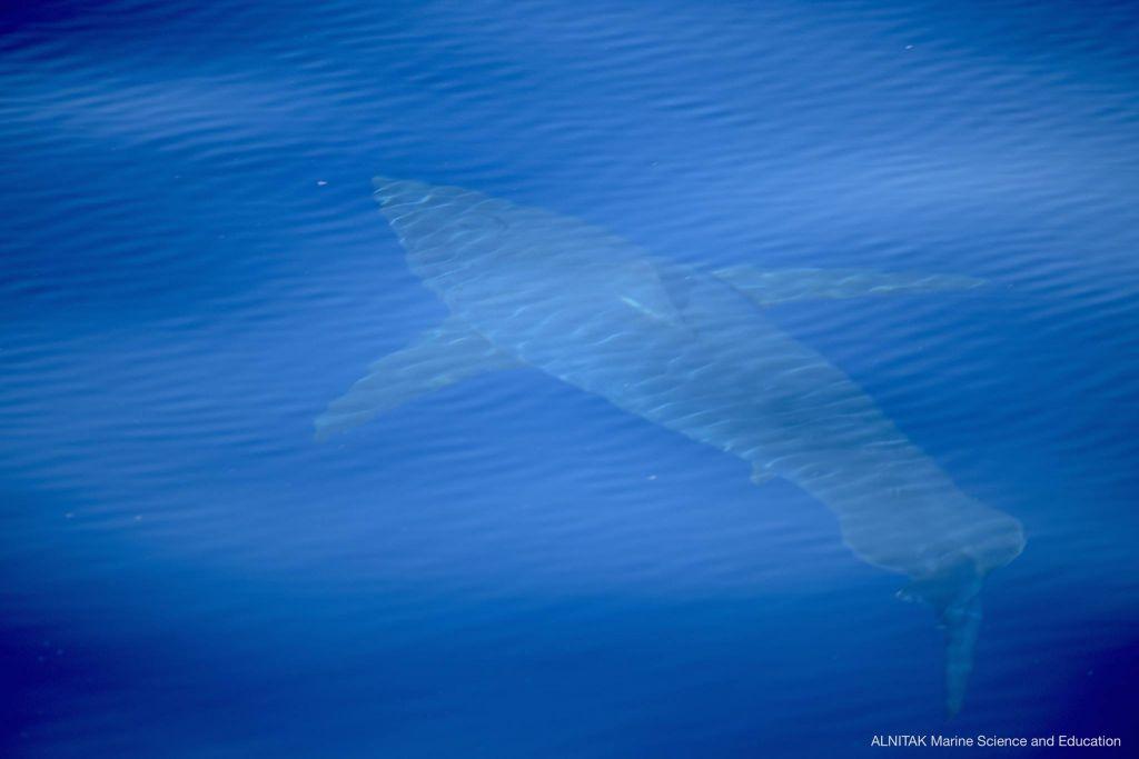 requin-Baleares-062018