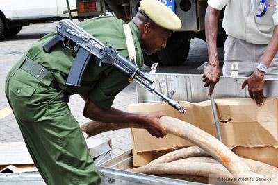 Interpol : Opération Internationale contre le trafic d'ivoire INTERPOL_trafic_ivoire