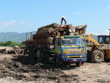La déforestation : causes et conséquences