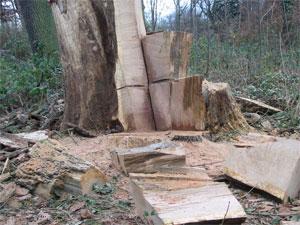 Les principales causes et solutions à la déforestation