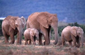 Pour un moratoire sur l'interdiction du commerce de l'ivoire