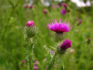 L'Agriculture biologique relance la biodiversité
