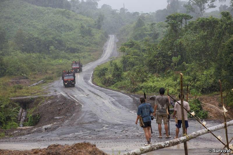 Les manifestations contre la déforestation se multiplient à Bornéo