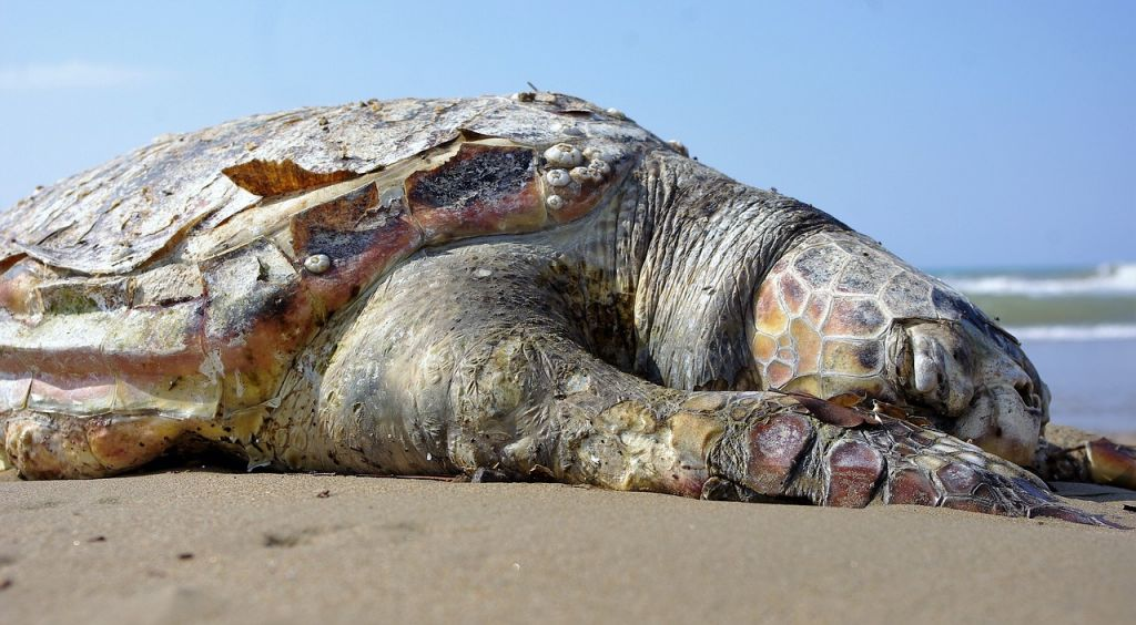 tortue-marine-morte