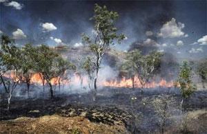 Pertes nettes de forêts: l'Afrique au deuxième rang mondial