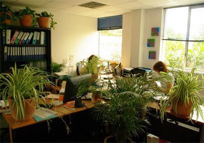 plantes_vertes_bureau