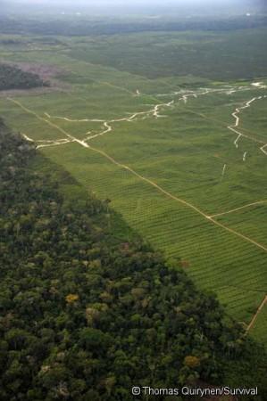 Les mesures pour combattre le réchauffement climatique détruisent les peuples indigènes