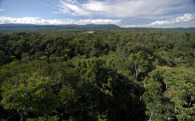 Extrêmement Forêt amazonienne : 390 milliards d'arbres et 16 000 espèces  KA14