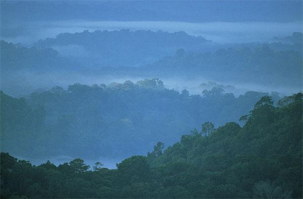 [Article] Préserver les forêts aide à sauver les coraux Parc_Guyane