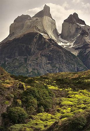 patagonie_arbre_montagne
