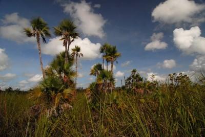 Savane tropicale mexicaine