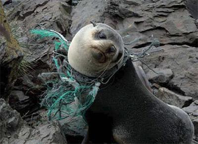 300 milliards d'êtres humains dans les océans chaque année