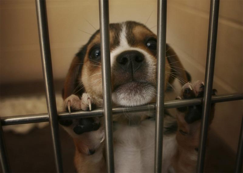 chien test animaux