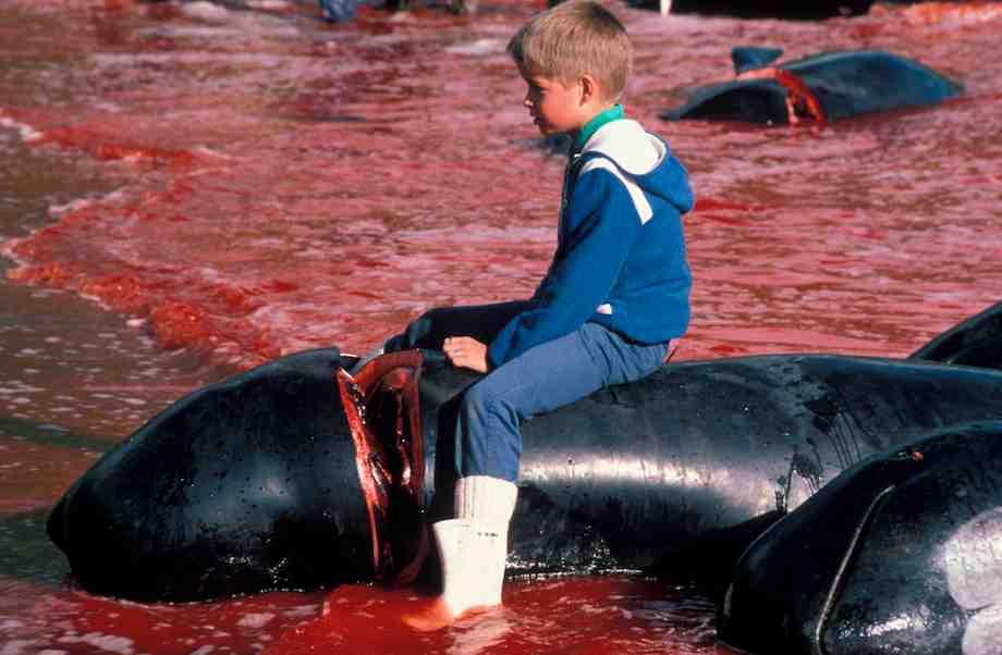 enfant dauphin mort