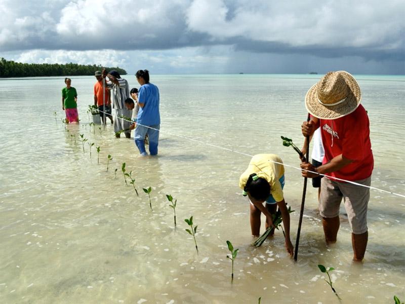 plantation mangrove Tuvalu