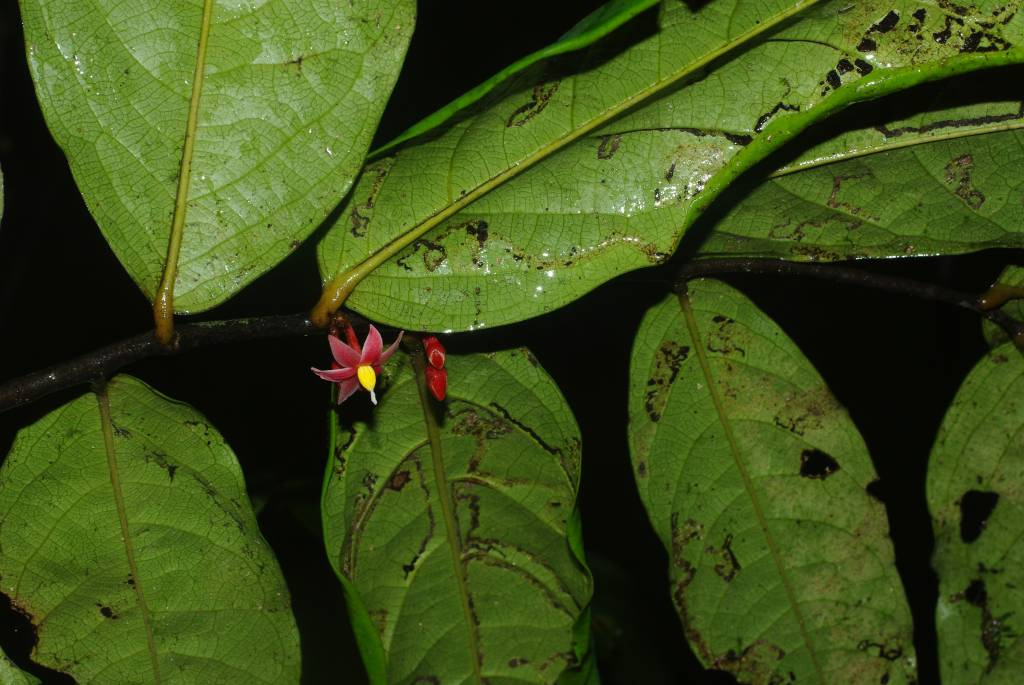 plante tropicale fleurs