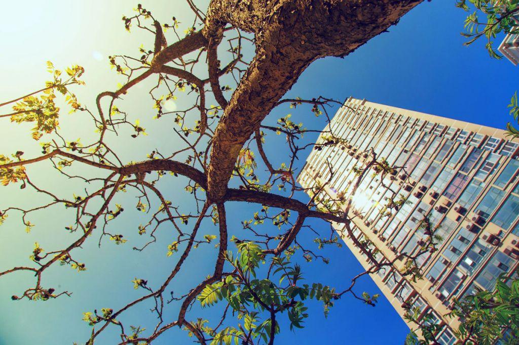 Planter des arbres en ville peut sauver des dizaines de ...