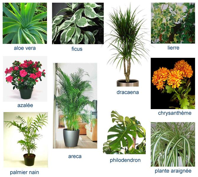Sois belle et d pollue moi le pouvoir d polluant des - Noms de fleurs et plantes ...